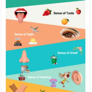 Printable Five Senses Worksheets